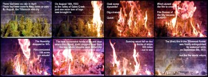 Tillamook Burn